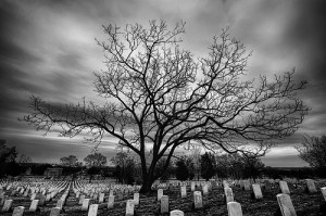 tree in middle of graveyard